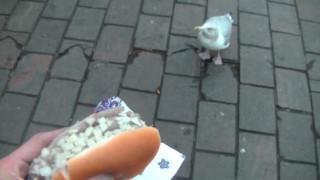 Op de Haagse Toer: Lunch met Willy